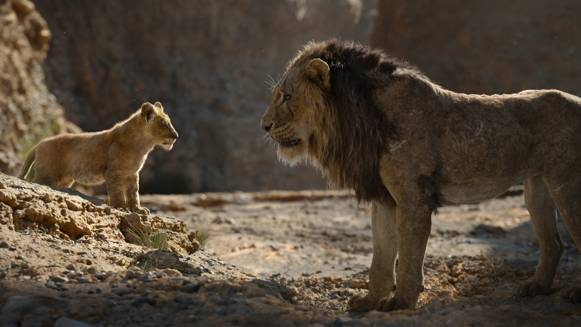 The Lion King 2019 Review Movies For Kids